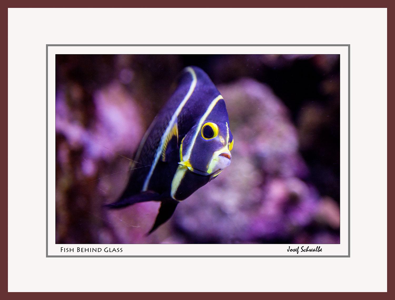 Fish Behind Glass