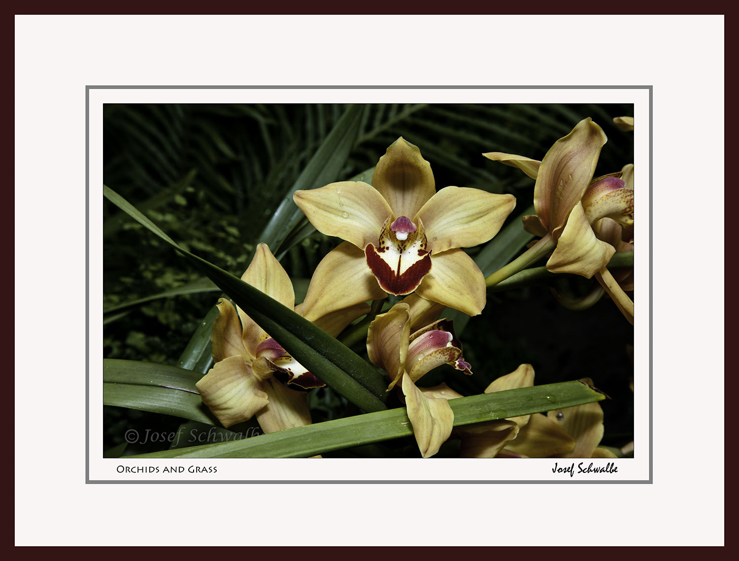 Orchids and Grass