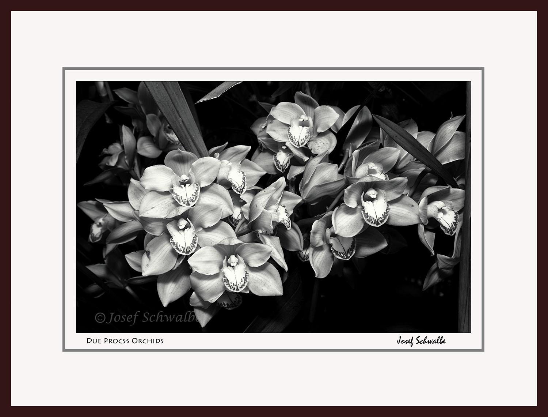 Due Process Orchids