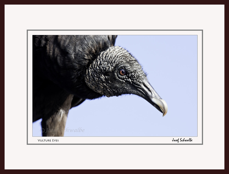 Vulture Eyes