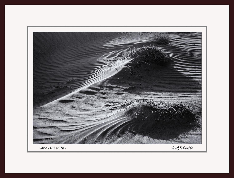 Grass on Dunes