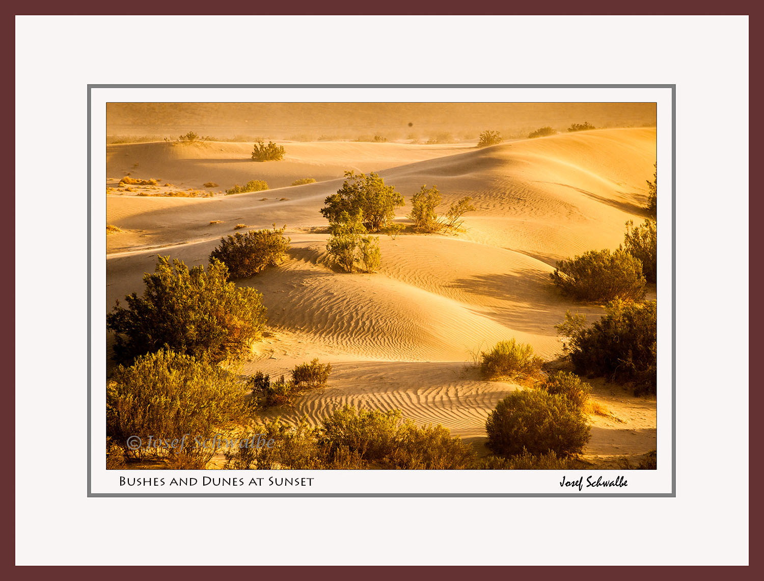 Bushes and Dunes at Sunset