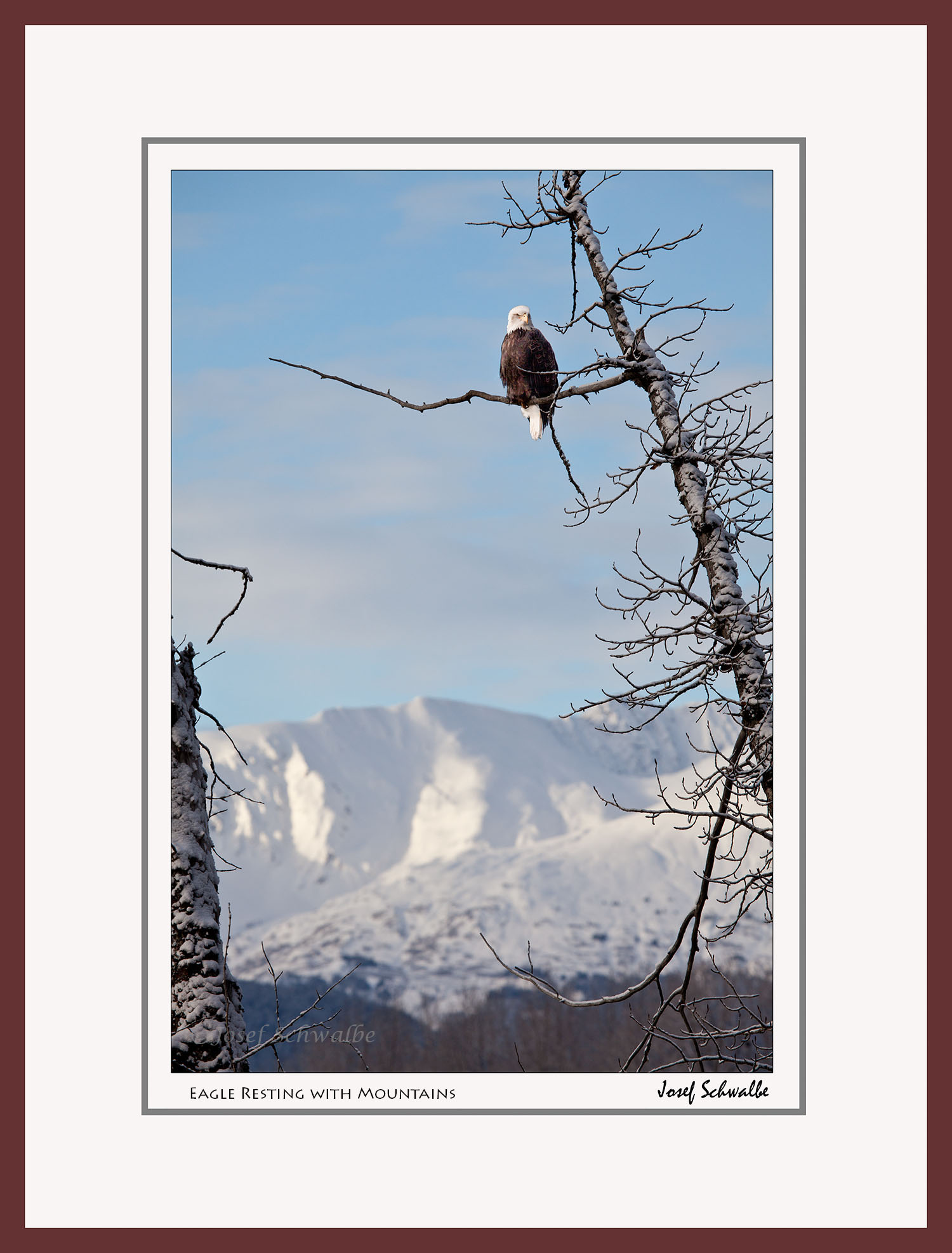 Eagle Resting with Mountains