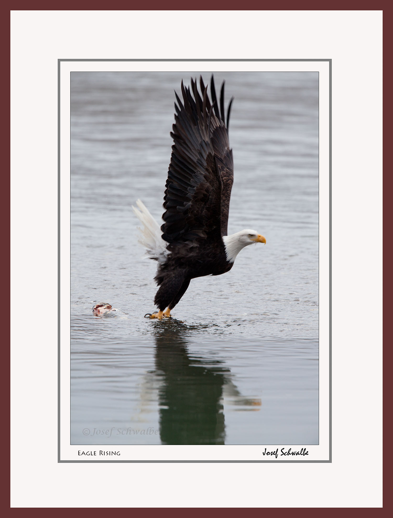 Eagle Rising