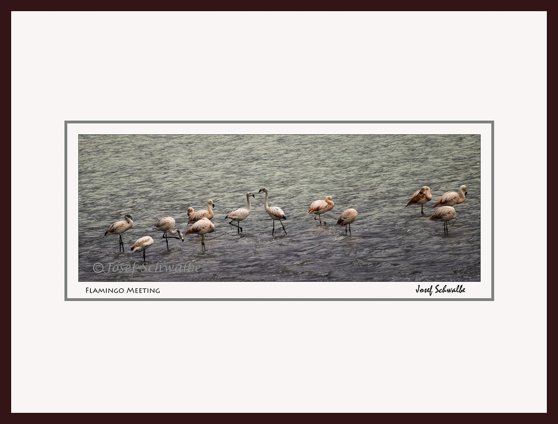 Flamingo Meeting