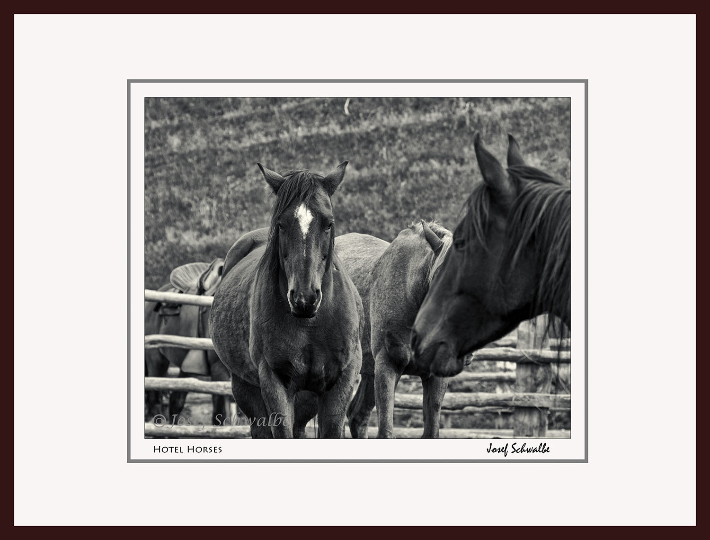 Hotel Horses