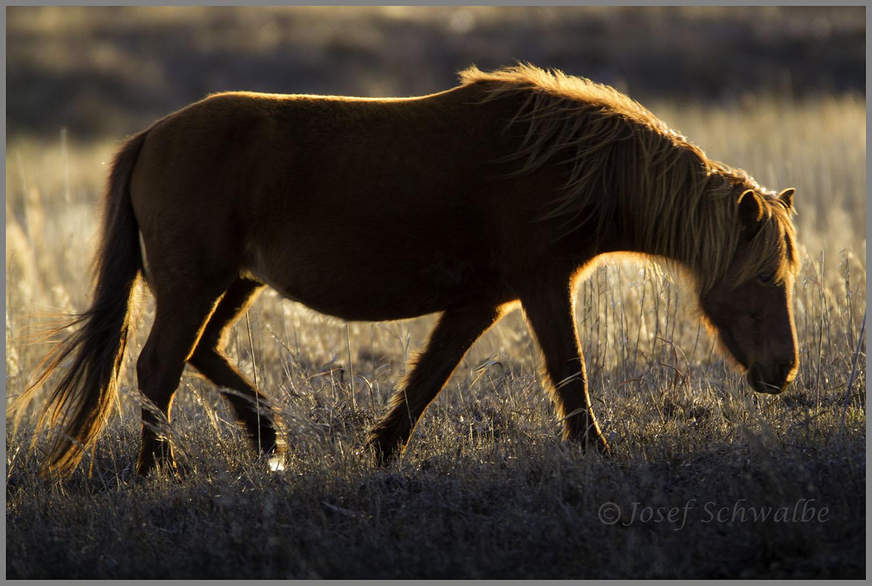 Blazing_Horse(HomePage).jpg