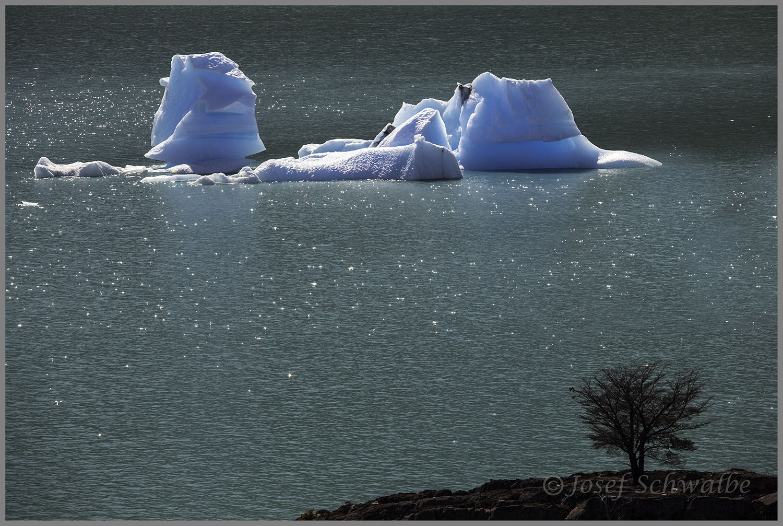 IcebergAndBush(HomePage).jpg