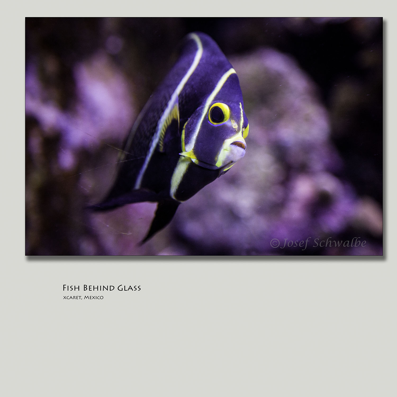 FishBehingGlass.jpg