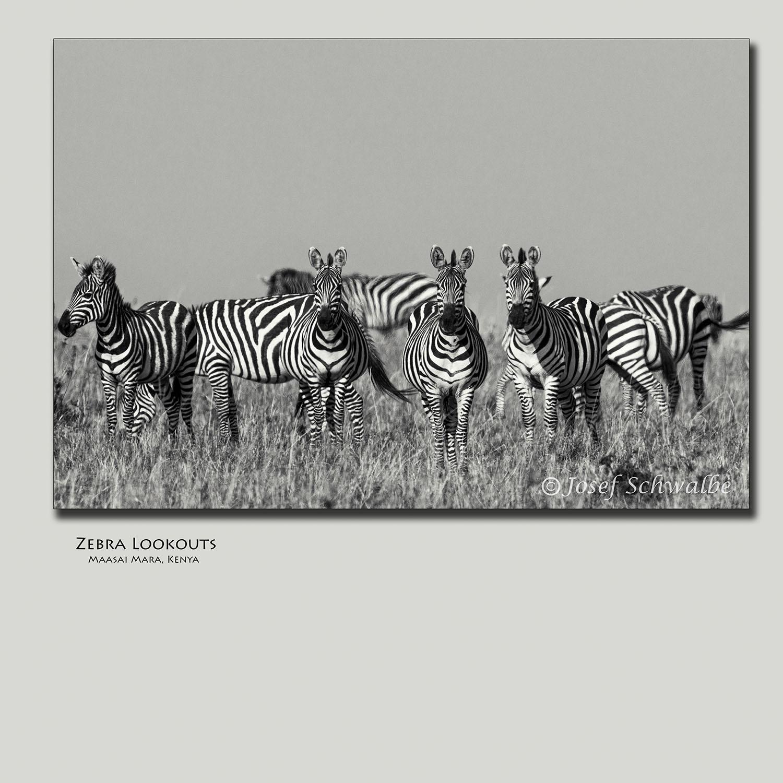 Zebra Lookouts