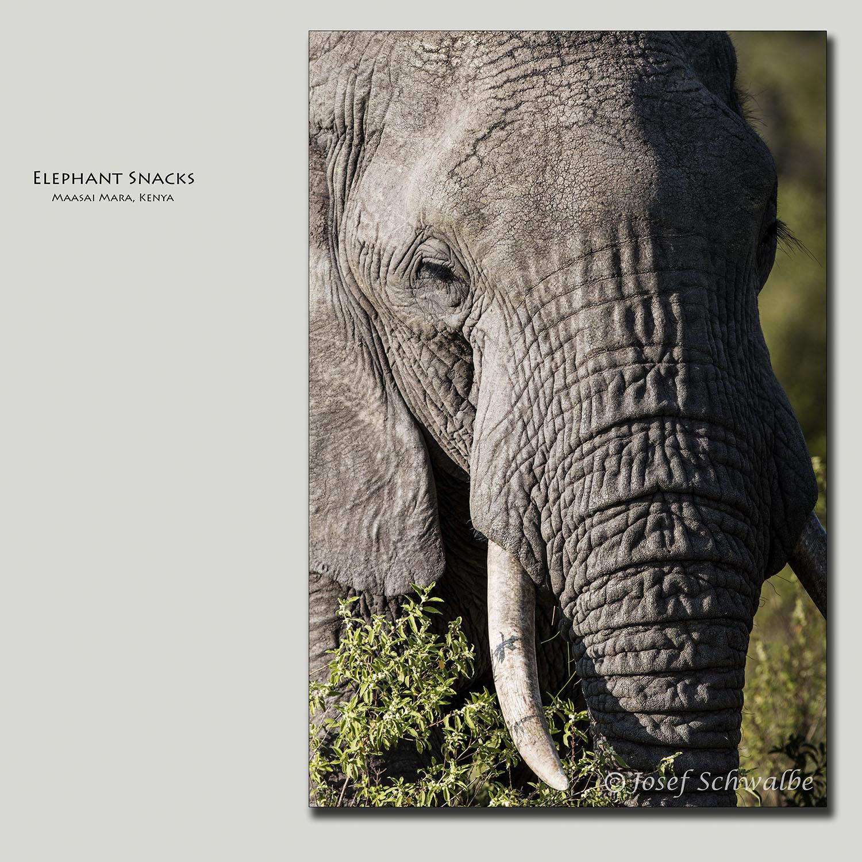 Elephant Snacks