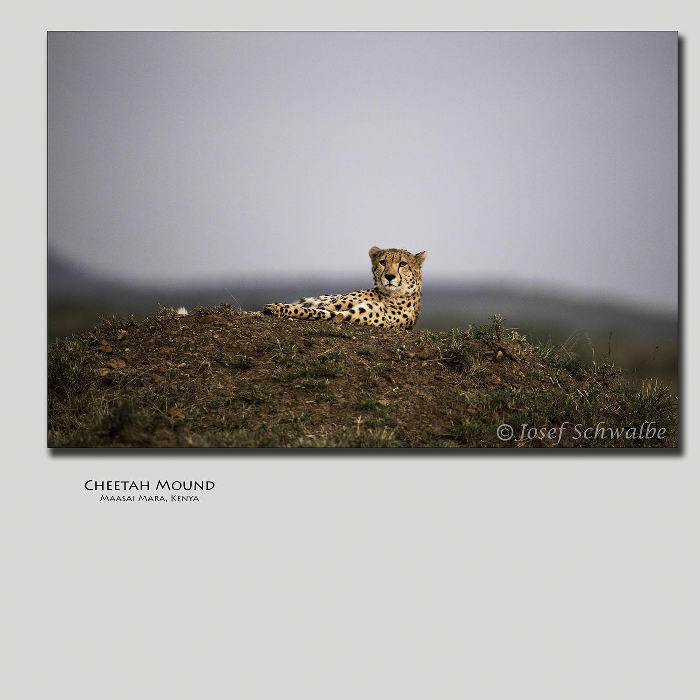 Cheetah Mound
