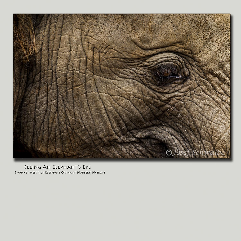 Seeing An Elephant's Eye