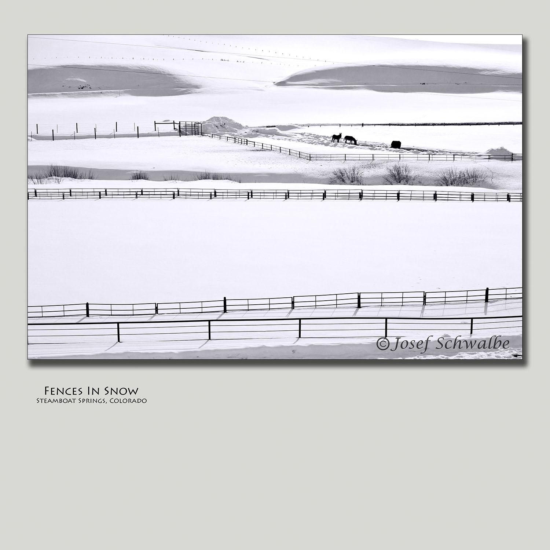 Fences In Snow