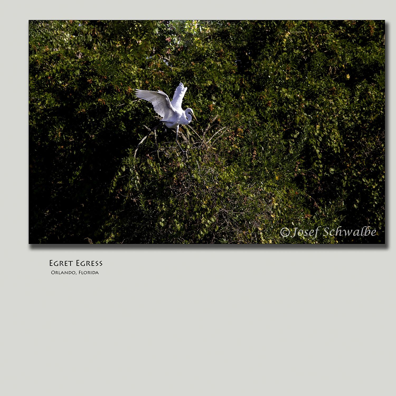 Egret Egress