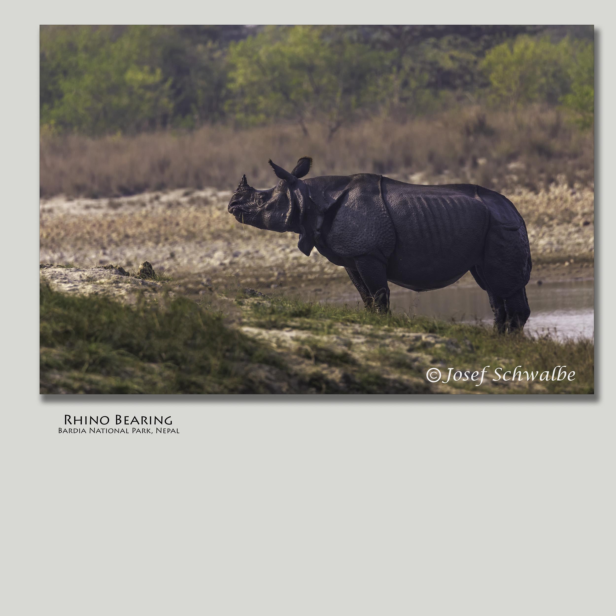 RhinoBearing.jpg