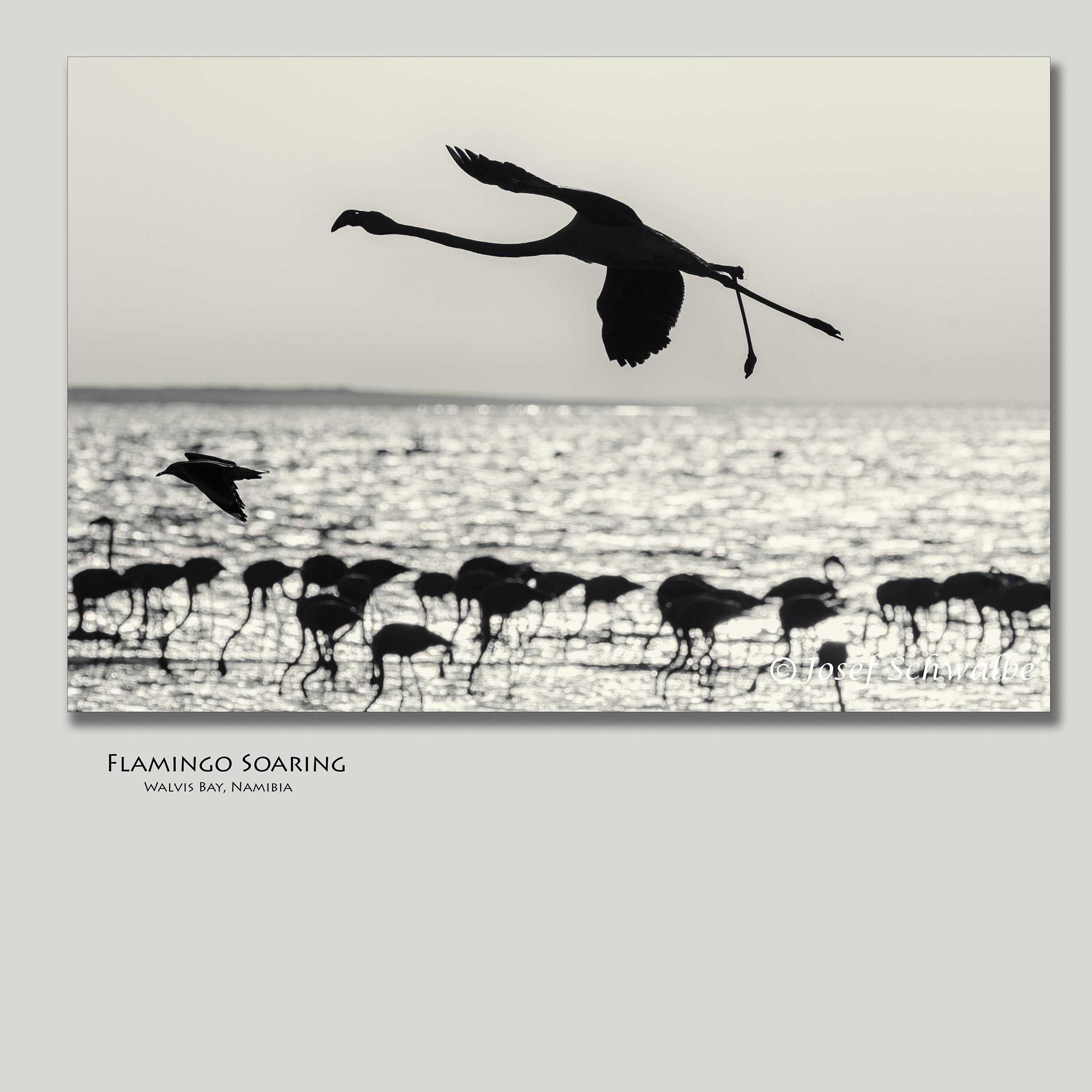 FlamingoSoaring.jpg