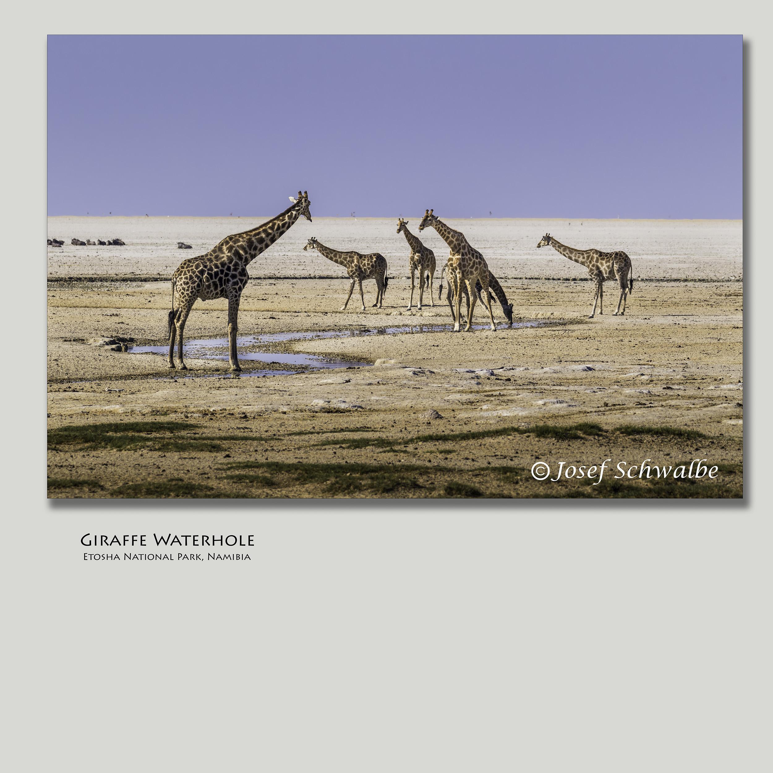 GiraffeWaterhole.jpg