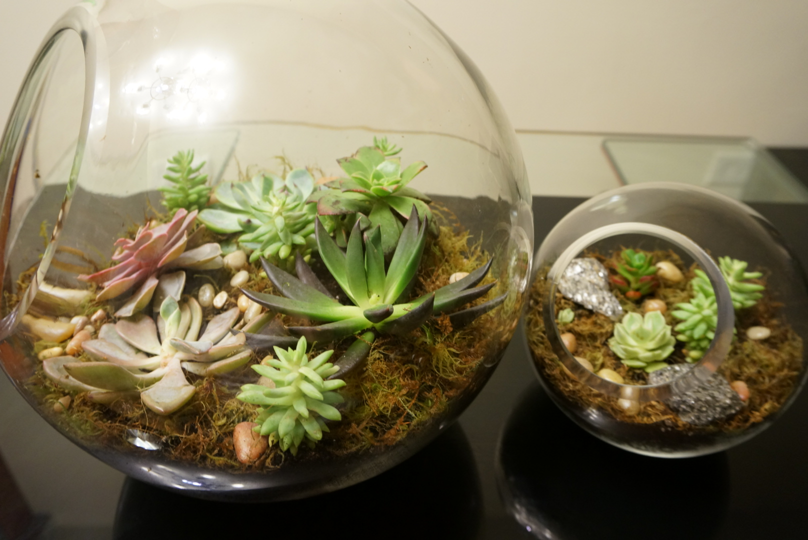 A sideview of the larger terrarium. Look how pretty the Black Prince is!