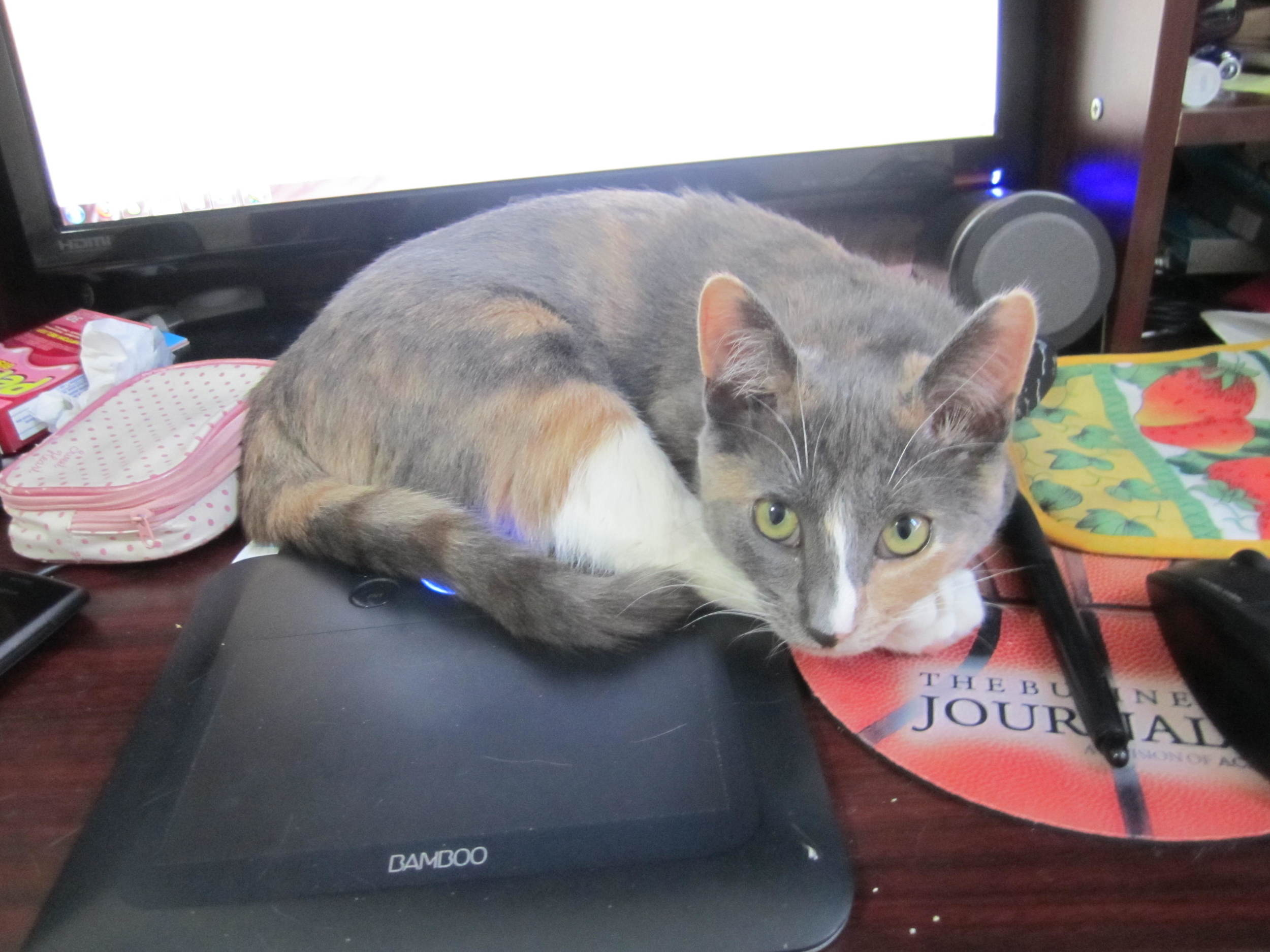 She used to follow me everywhere and loved to sit on my desk to get my attention. Isn't she adorable?