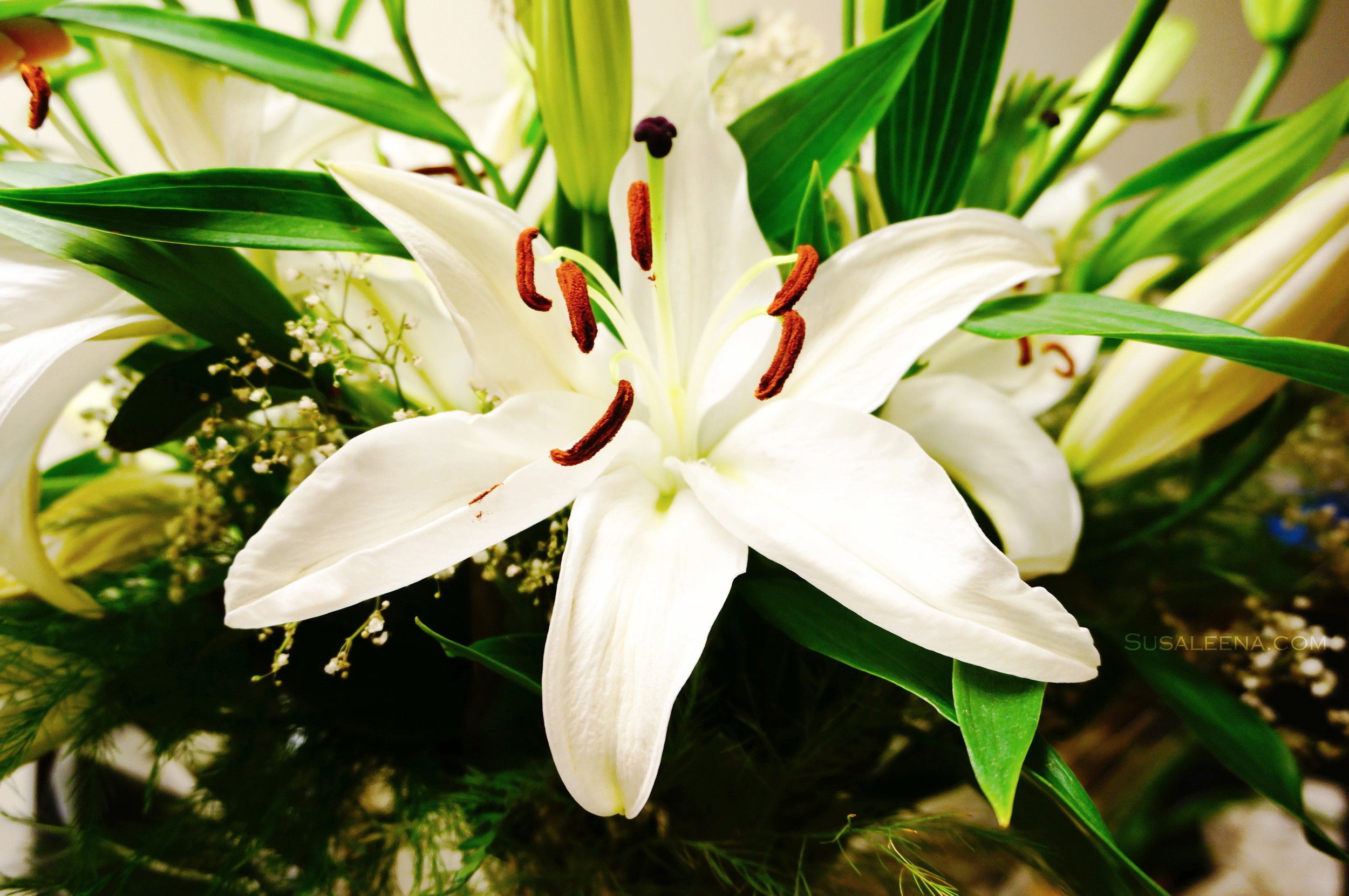 Close-up of one of the Lilies, there were about 47 blooms total!