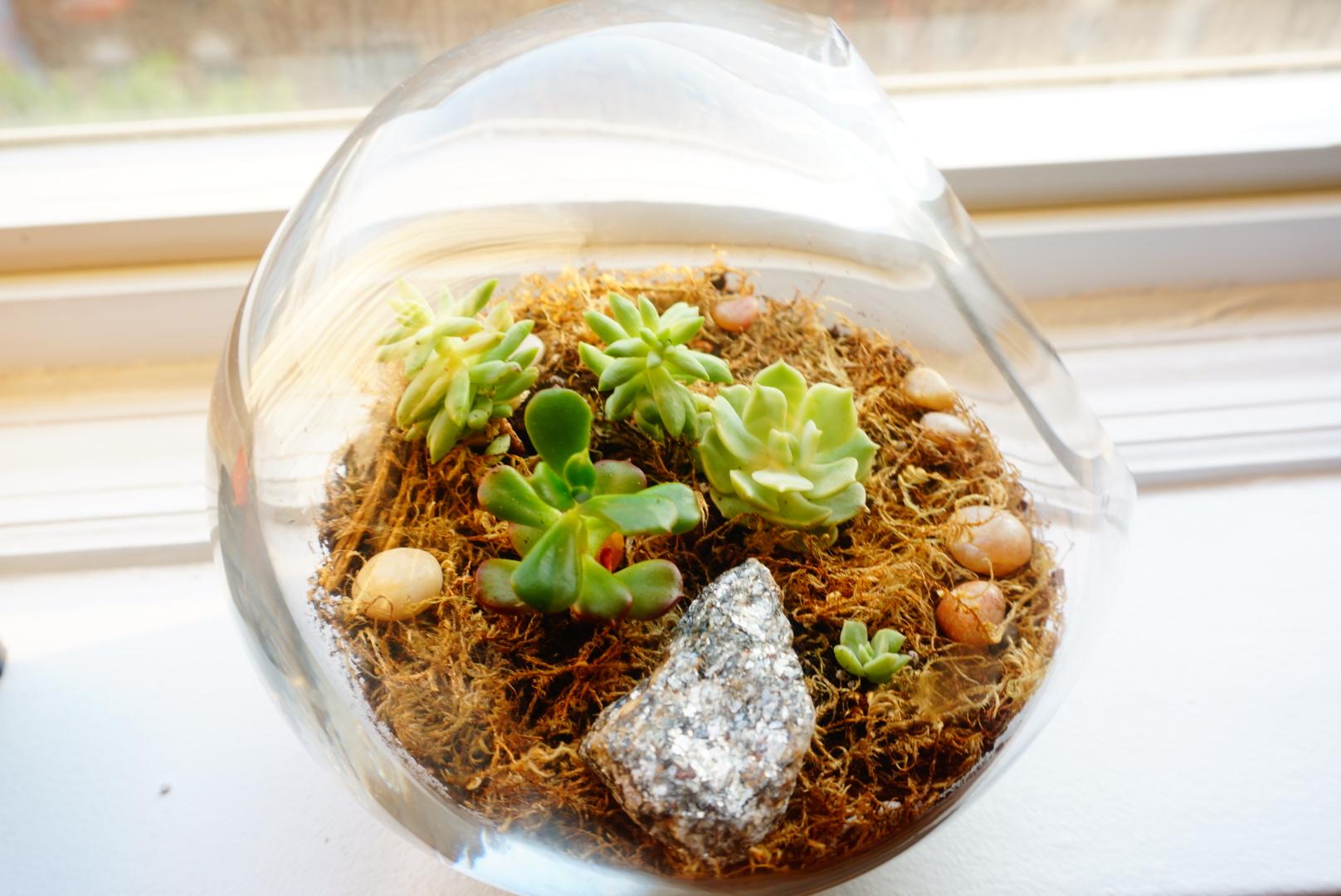 Cute baby terrarium ready for gifting!