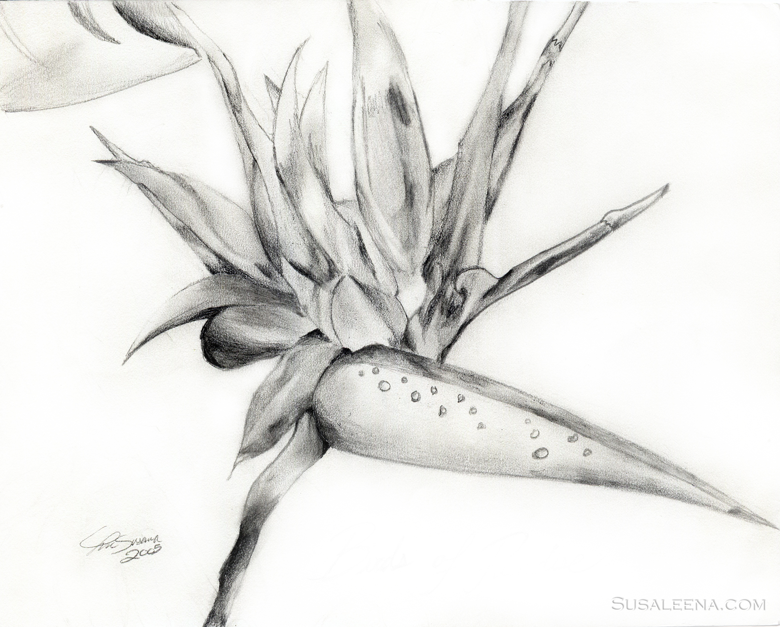 """""""Birds of Paradise"""" -A sketch during my high school years for practice"""