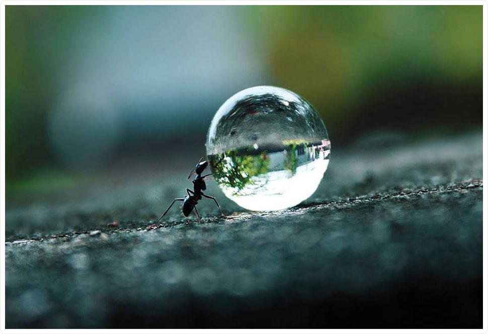 ant_droplet.jpg