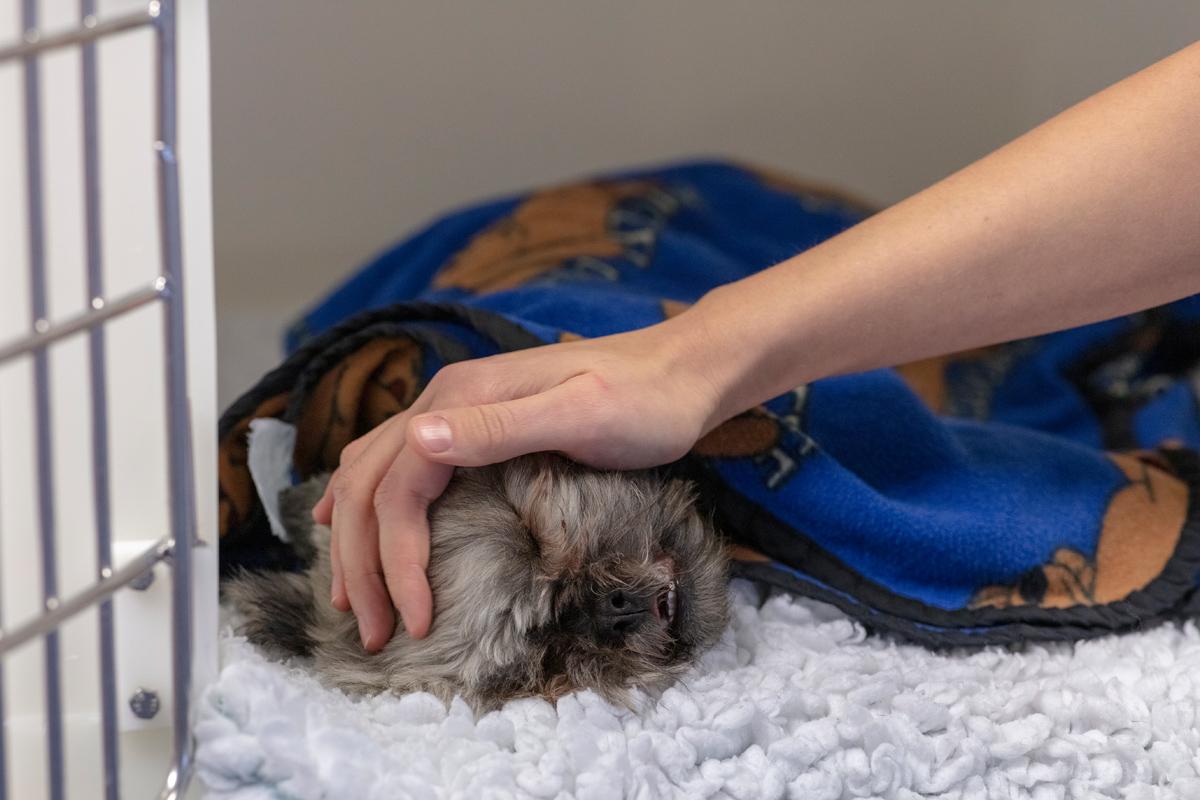 pet care campaign