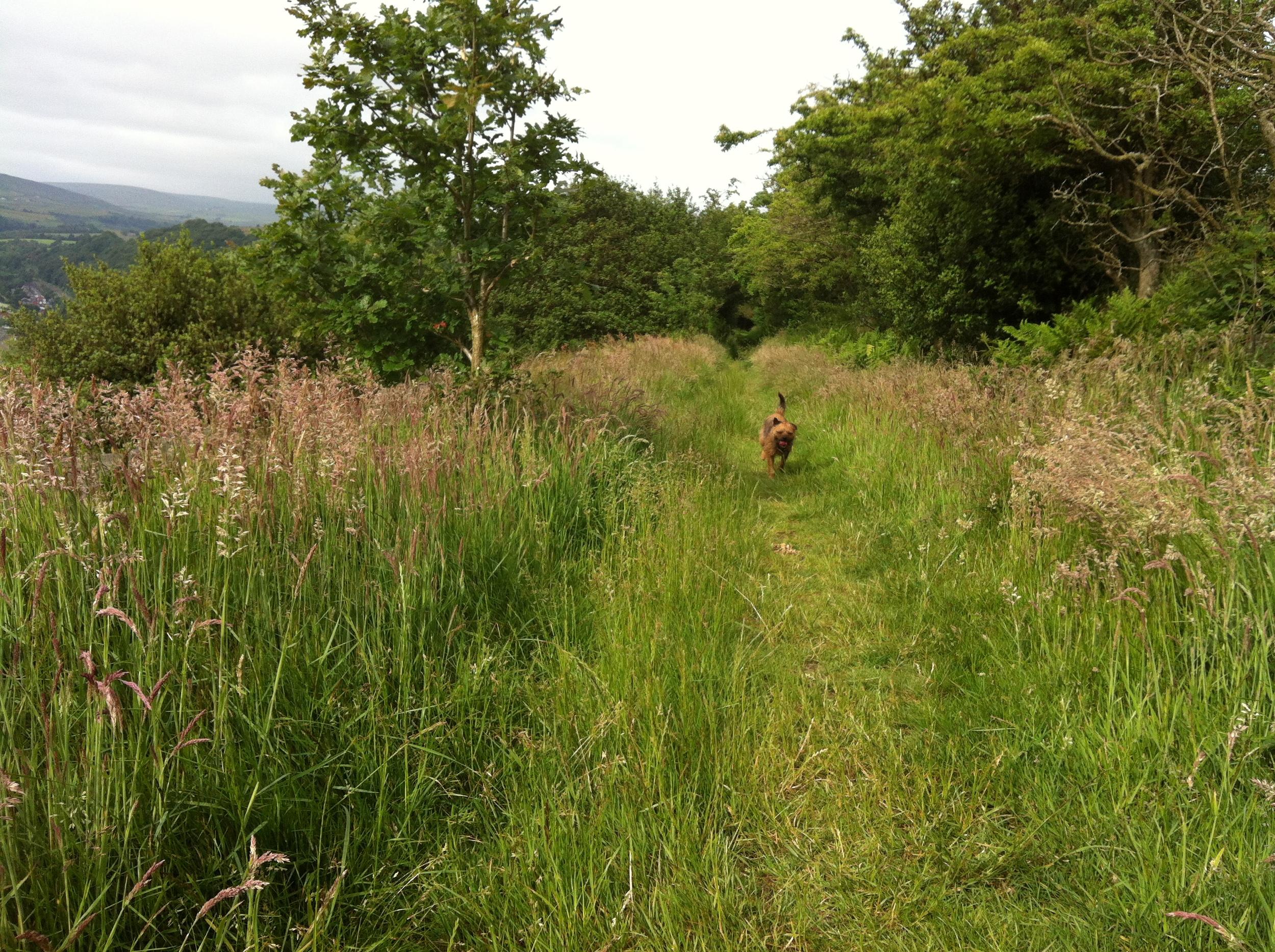 Tess on summer walk
