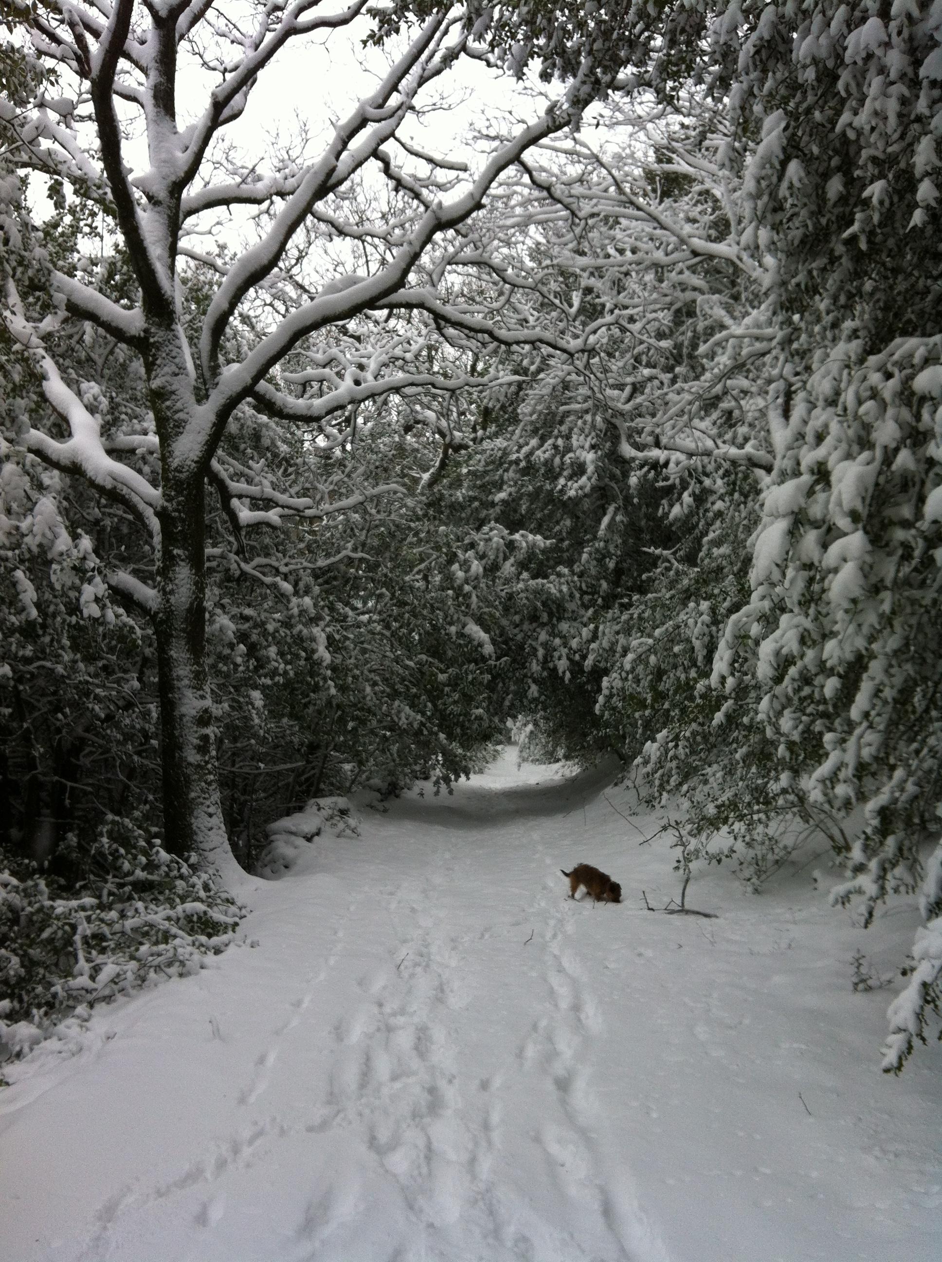 Tess walk in snow