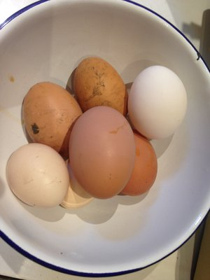 A collection of eggs - from my chickens, not from dragons!