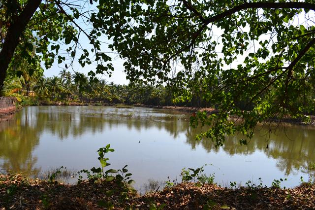 Lake view behind main building at The Mandala
