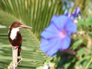 A small bird ponders nature beside a beautiful purple flower