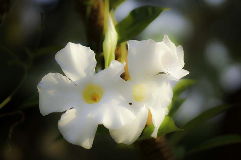 mandala-flowers-2.jpg