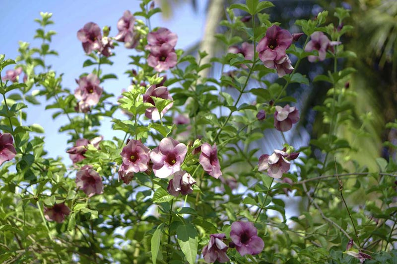 mandala-flowers-5.jpg