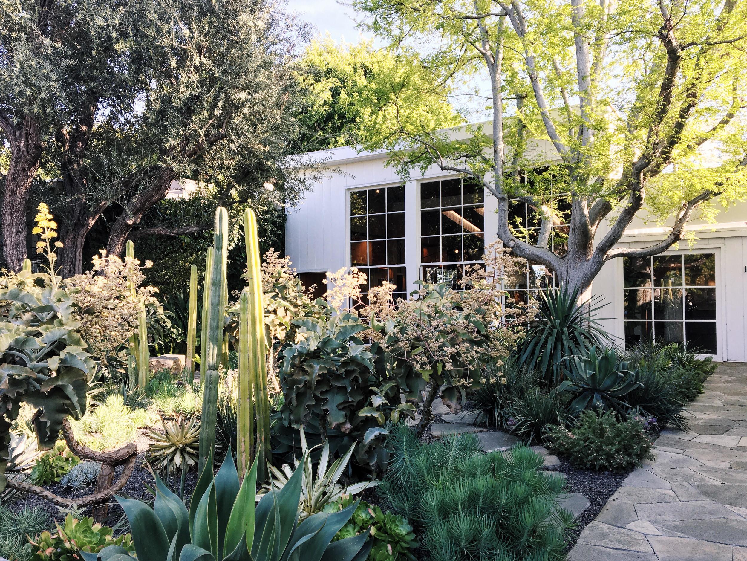 Cactus garden at Isabel Marant's shop on Melrose.