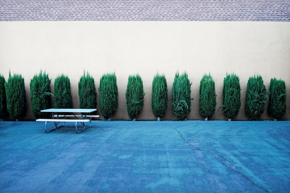 Bench and Bushes (at a School) ., 2011.