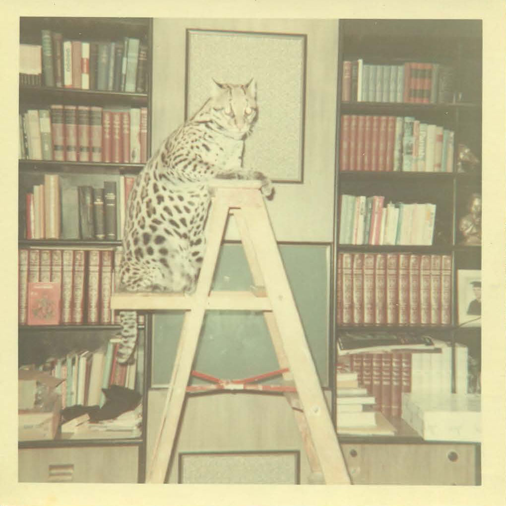 Kitty_ladder.jpg