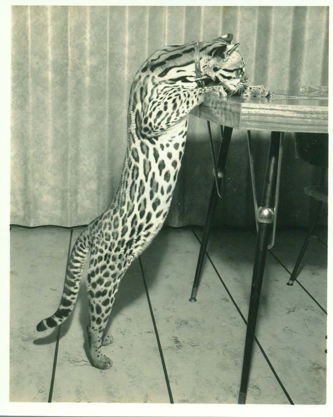 Kitty_table_2.jpg
