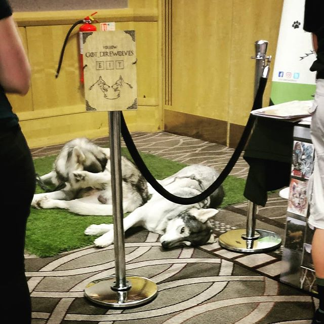 There's direwolves at this con. That is all.