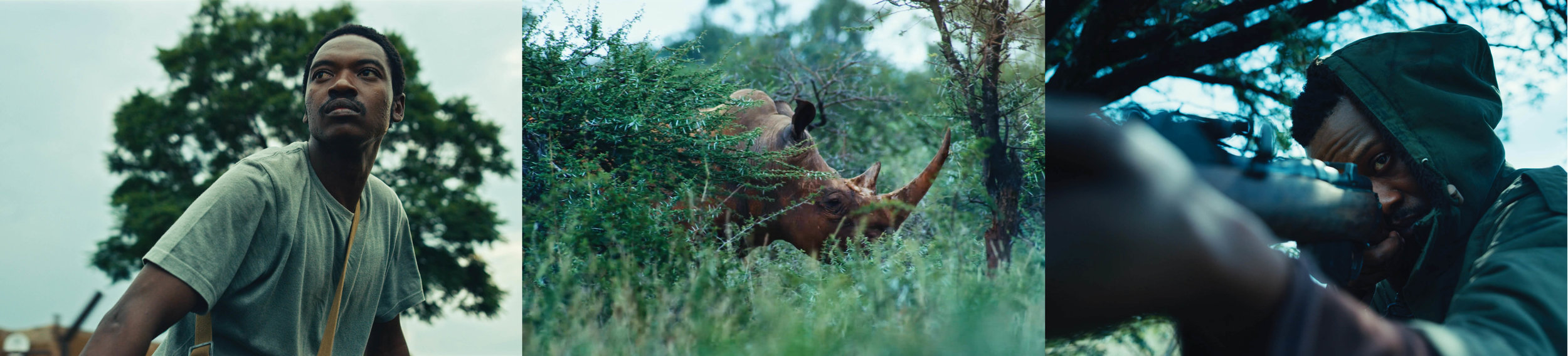 sides of a horn -