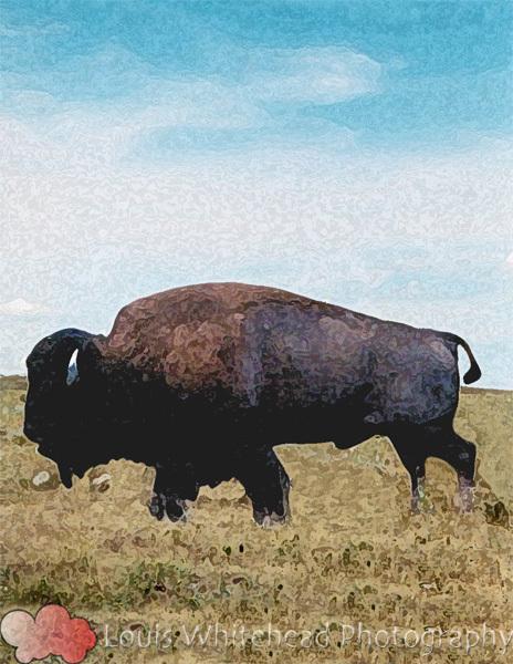 BuffaloSkyLogoWeb.jpg