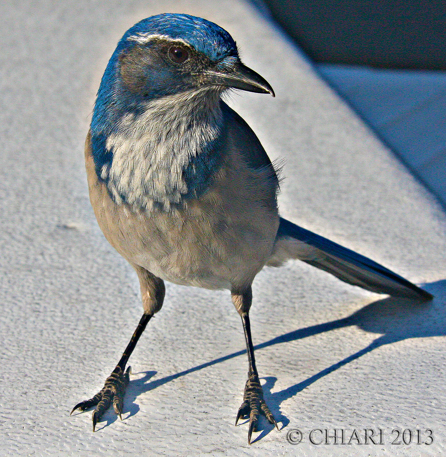 Blue Jay El Capitain campground.