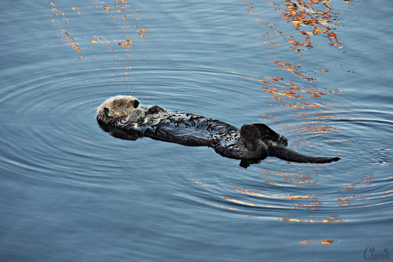 morro-bay-sea-ottor-perfect-morning--19-chiaristyle.jpg