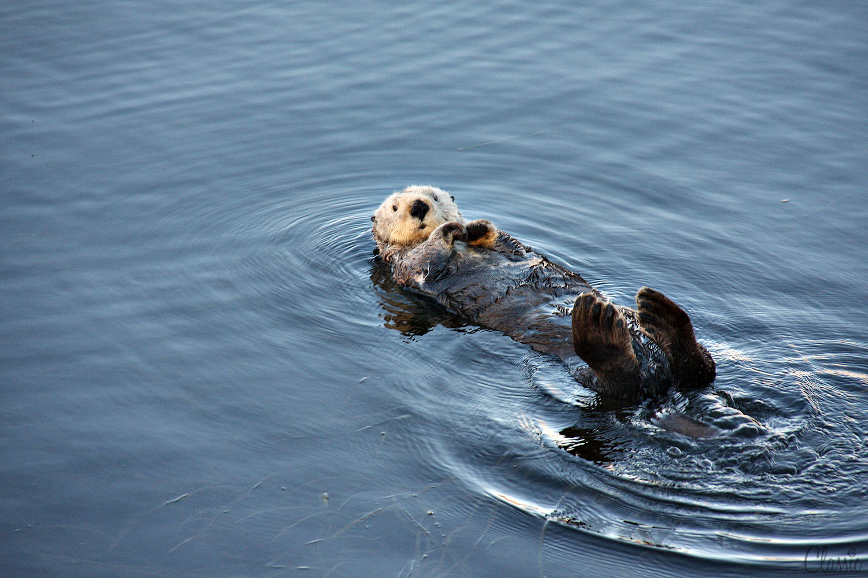 morro-bay-sea-ottors-hey-there19-chiaristyle.jpg