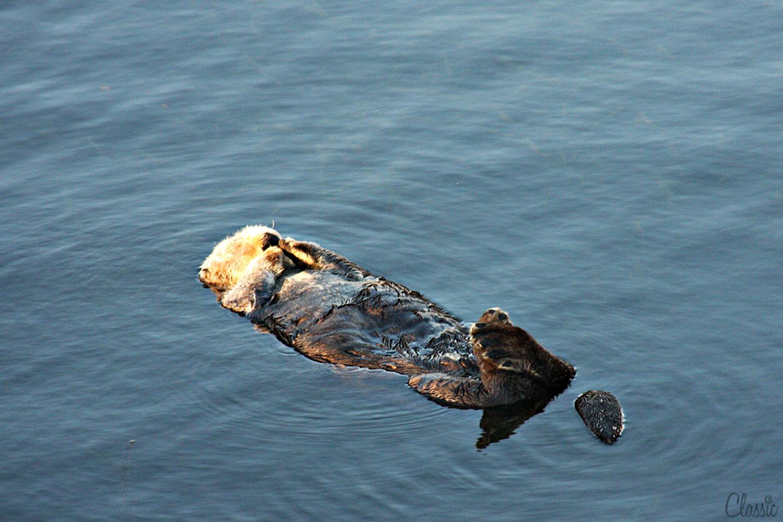 morro-bay-sea-ottors-morning-sunshine-19-chiaristyle.jpg