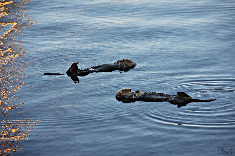 morro-bay-sea-ottor-surprise-19-chiaristyle.jpg