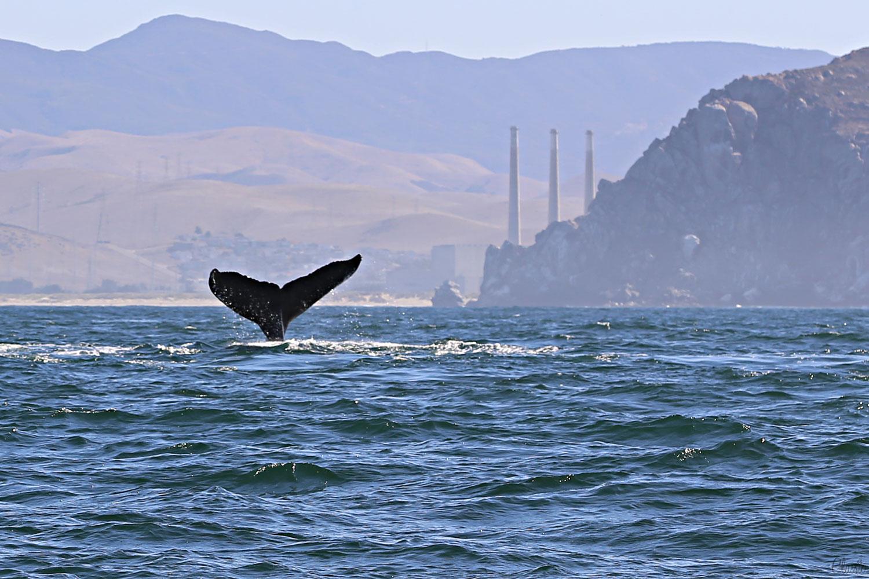 morro-bay-whale-trip-chiaristyle-october-6-2019.jpg