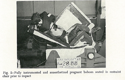"When members of a committee of the Society of Automotive Engineers became interested in how seatbelts affected pregnant women, the Federal Aviation Agency and researchers at Holloman Air Force Base conducted a series of experiments on pregnant baboons. Because researchers were not able to find enough pregnant baboons for their study, researchers implanted, in three non-pregnant baboons, a ""simulated uterus,"" which ""consisted of a rubber balloon enclosed in nylon netting and [containing] a transducer to measure pressure changes during acceleration."" The researchers then put the baboons through series of decelerations, which were meant to mimic the experience of a ""typical passenger in a hypothetical Boeing 720 type airliner crashing on takeoff."" All of the mothers and fetuses died, some only after twenty hours of suffering."